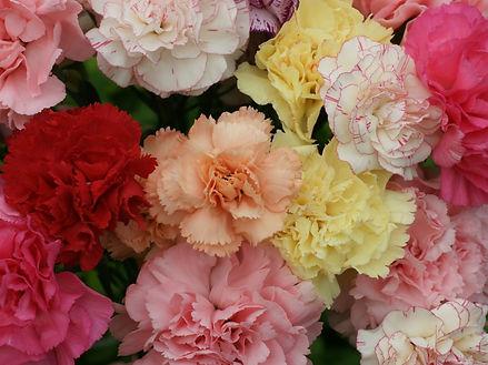 Carnation (mixed)
