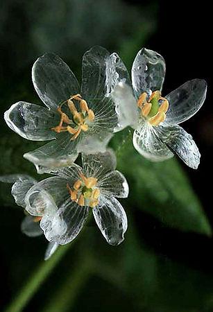 Skeleton Flower