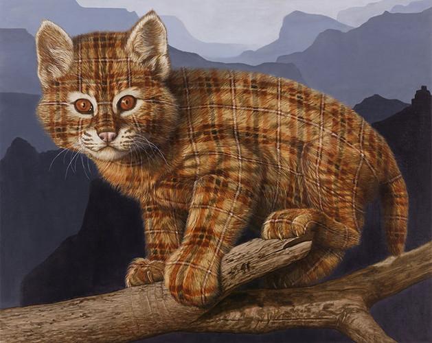 Tartan Bobcat Kitten