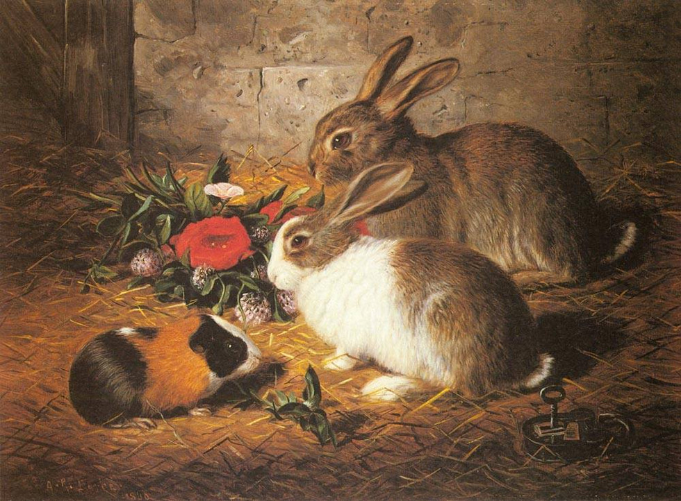 Escaped: Two Rabbits and a Guinea Pig