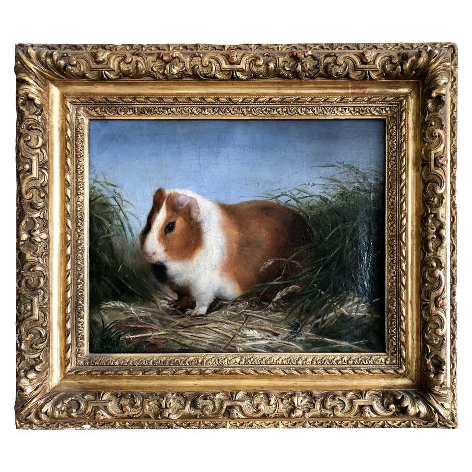 Portrait of a Pet Guinea Pig