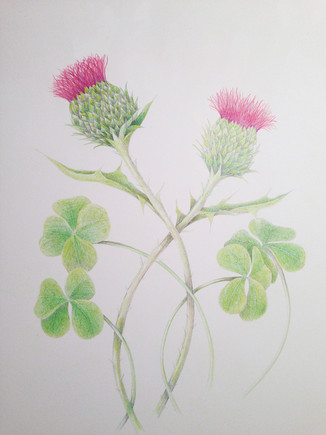 Happy St. Patrick's Day to all with shamrock green and thistle purple!