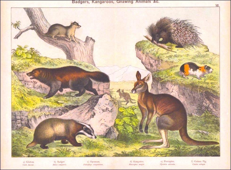 Schubert Animal Realm, 1880 Chromolith
