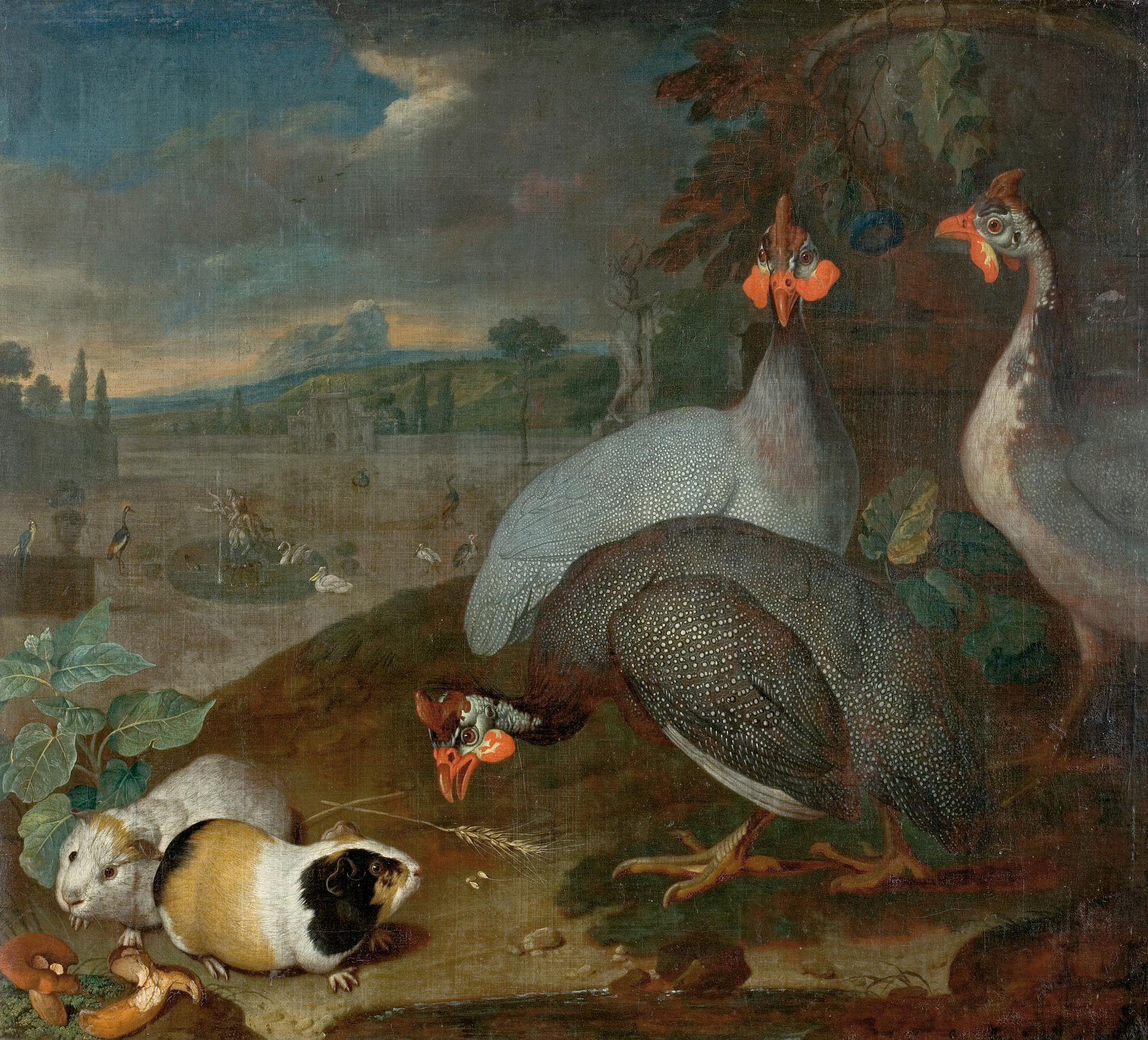 Guinea Fowl with Guinea Pigs