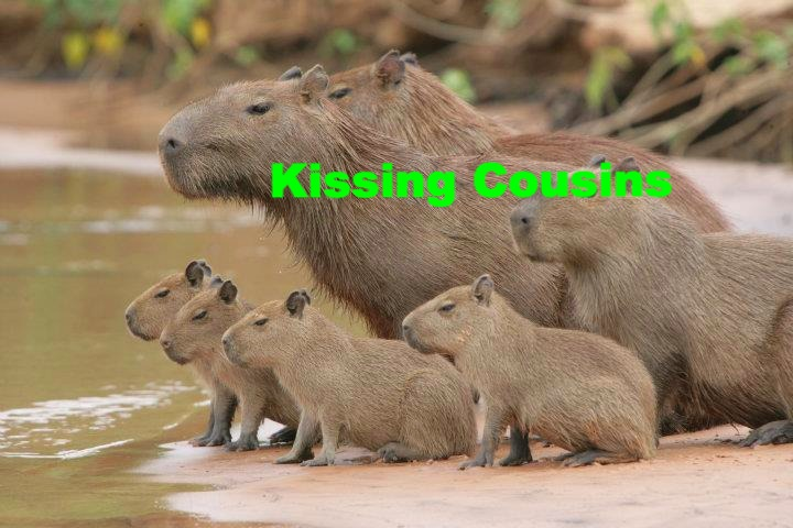 Capybarafamily_edited