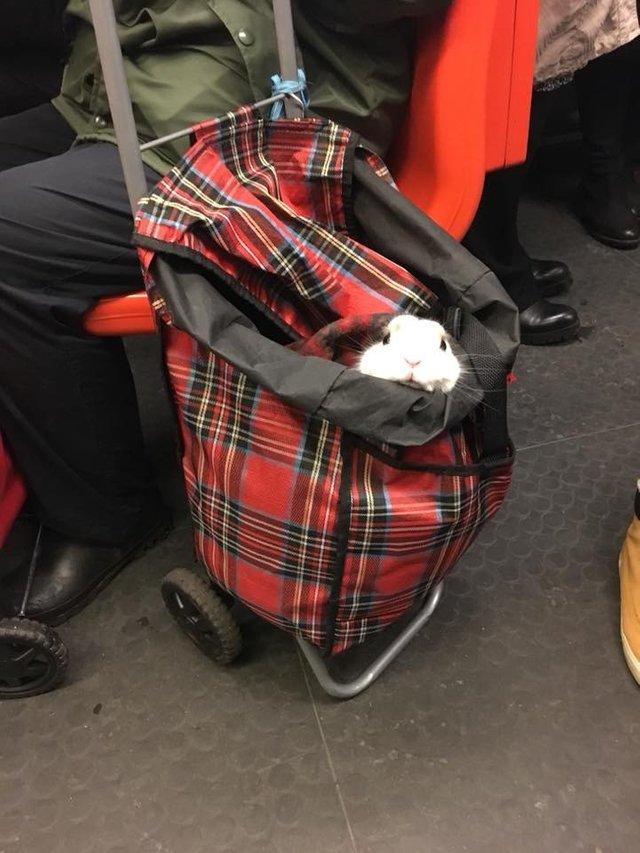 bunnybackpack.jpg
