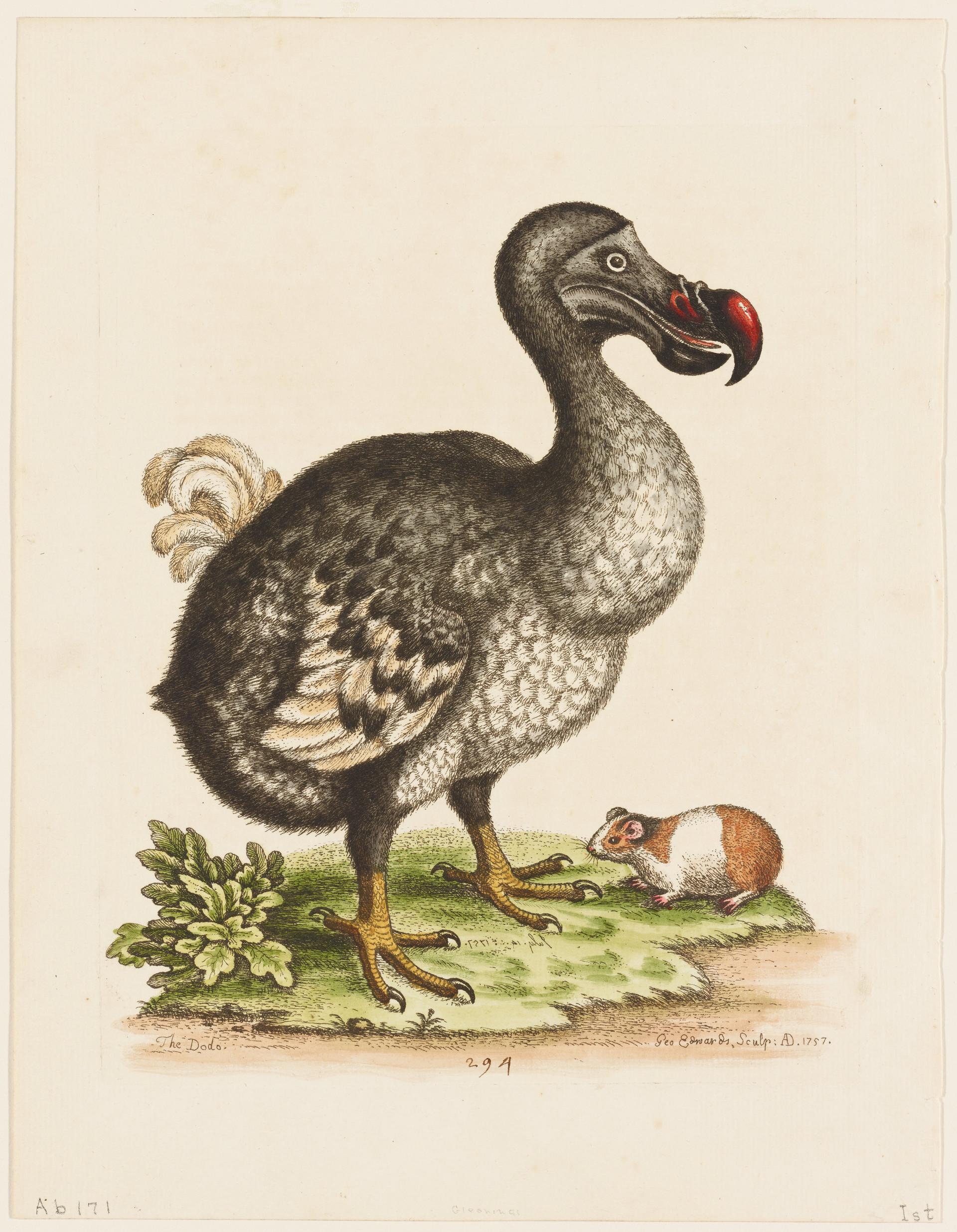 Dodo with Guinea Pig