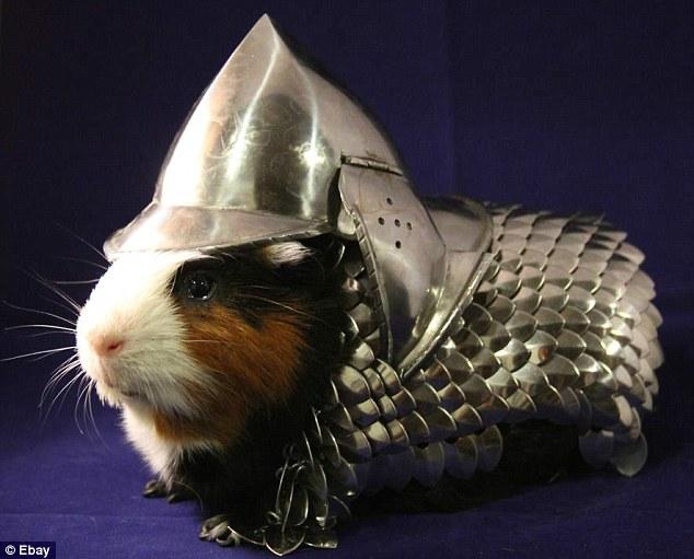 Medieval Pig