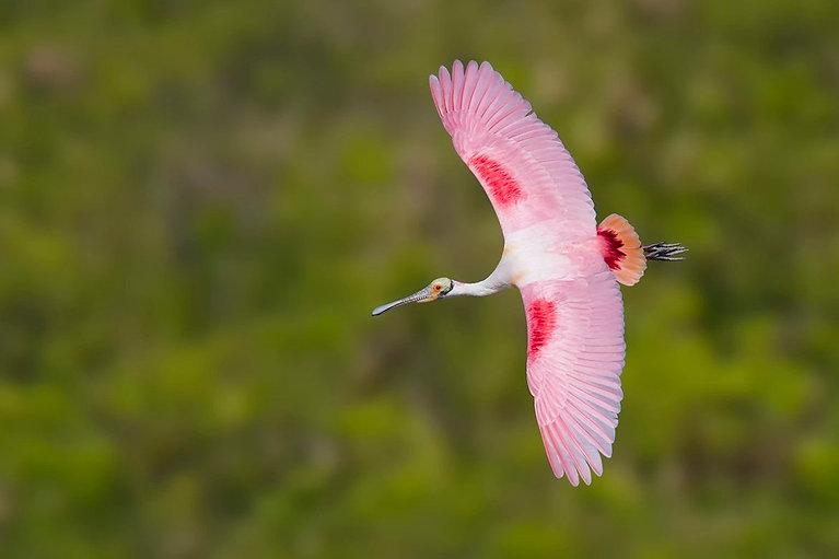 The Rare Bird