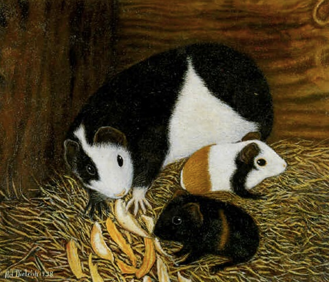 Three Guinea Pigs - Mother and Young Eating