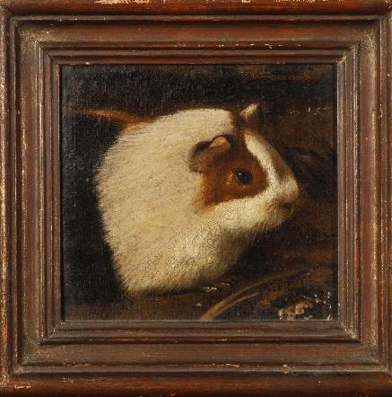 Head of a Guinea Pig
