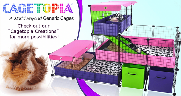 """I'm """"House Me"""" Hazel!  These are my """"go to"""" places for a cozy cage, happening hutch, or piggy playground!"""