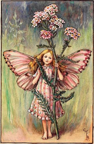 Yarrow Fairy