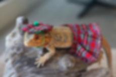 Lowpin Lizards