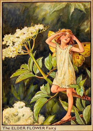 The Elder Fairy, Cicely Mary Barker, 1923