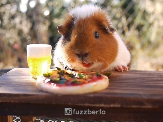 pizzastuff.jpg