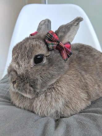 Bows in your Hare's Hair!