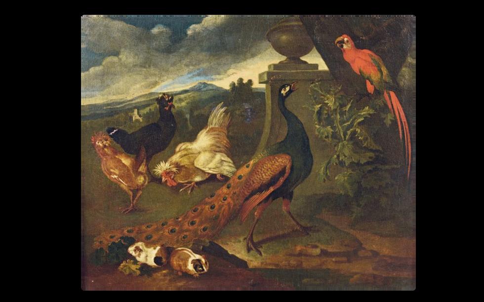 Oiseaux et Hamsters