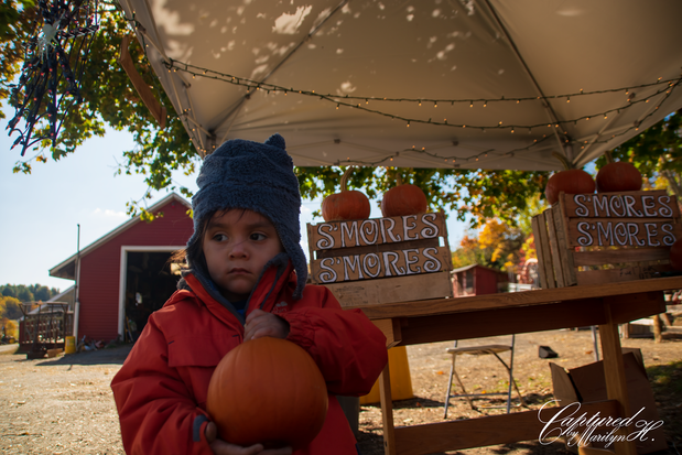 Pumpkin Picking photo by Captured by Marilyn H Photographer