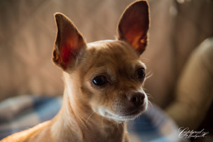 Princess, dogs are part of the family too - photo by Captured by Marilyn H Photographer