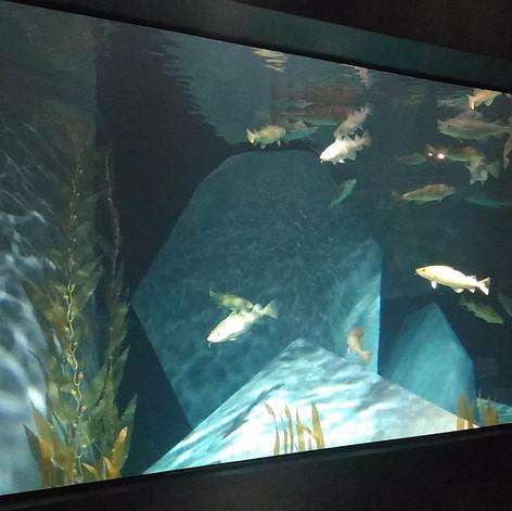 Aquarium des Morues. Musée Maritime d'Ílhavo