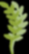 leaf2.png