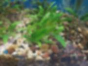 CRYPT PLANT.jpg