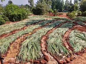 Sheet mulching: create soil anywhere!
