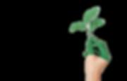 art-close-up-ecology-886521_edited_edite