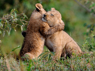 How We Ruined Hugs (And How to Fix It)