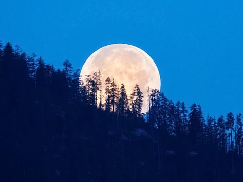 Cosmic Conversations Aquarius Full Moon, August 22nd, 2021
