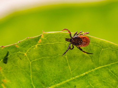 Preparing for Tick Season: You Found a Tick, Now What?