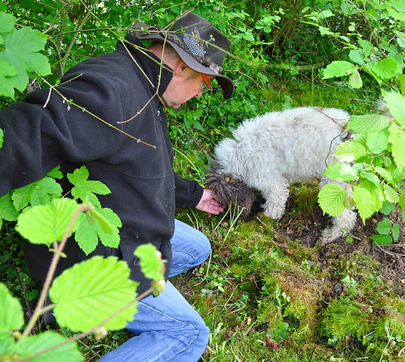 recherche truffe
