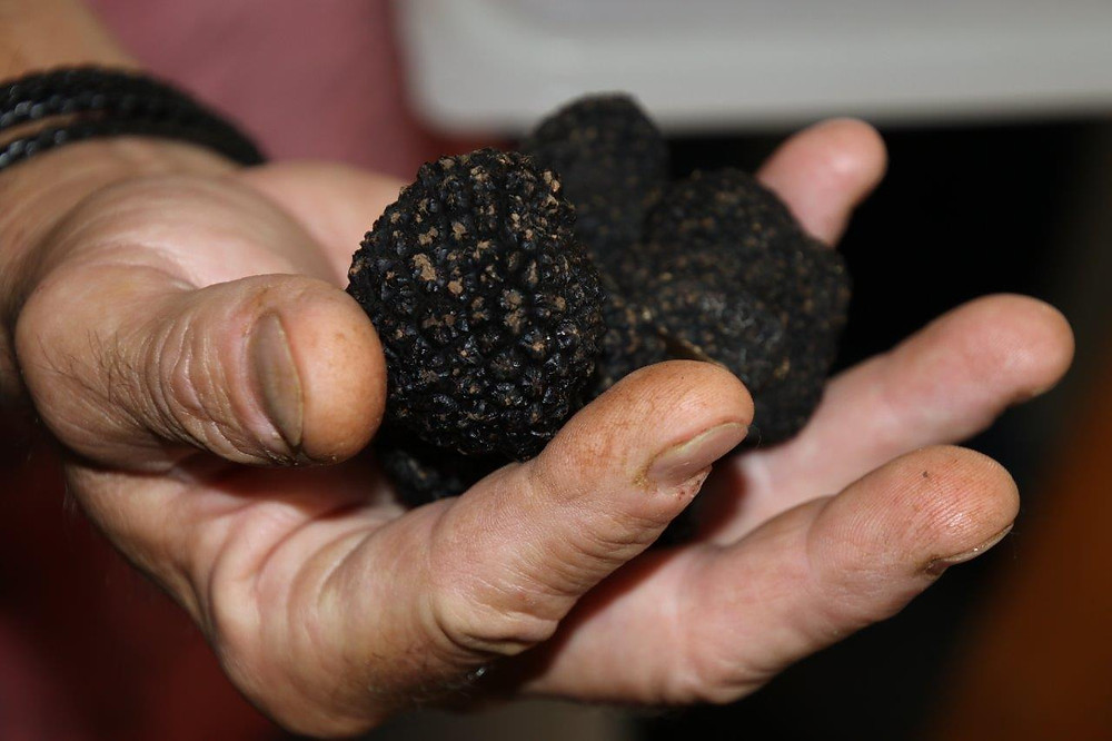 différence truffe noire truffe blanche