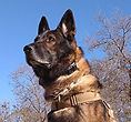 National Police Dog Foundation K9 - Aris260x300-260x300.jpg
