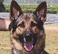 National Police Dog Foundation K9 - eros260x300.jpg