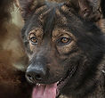 National Police Dog Foundation K9 - argo260x300-260x300.jpg