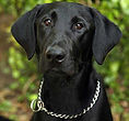 National Police Dog Foundation K9 - dino-260x300-260x300.jpg