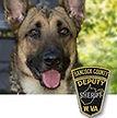 National Police Dog Foundation K9 - Nell.jpg