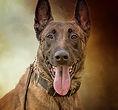 National Police Dog Foundation K9 - merica260x300.jpg