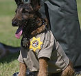 National Police Dog Foundation K9 - adam-260x300.jpg
