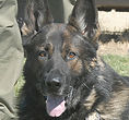 National Police Dog Foundation K9 - f-260x300.jpg