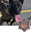 National Police Dog Foundation K9 - Hemi.jpg