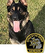 National Police Dog Foundation K9 - Rocky.jpg
