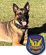 National Police Dog Foundation K9 - Bane.jpg