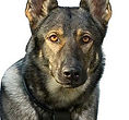 National Police Dog Foundation K9 - yudy-260x300-260x300.jpg