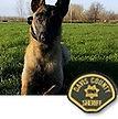 National Police Dog Foundation K9 - Eico.jpg