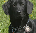 National Police Dog Foundation K9 - c-260x300.jpg