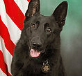National Police Dog Foundation K9 - dano-260x300.jpg