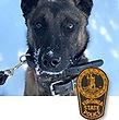 National Police Dog Foundation K9 - Vader.jpg